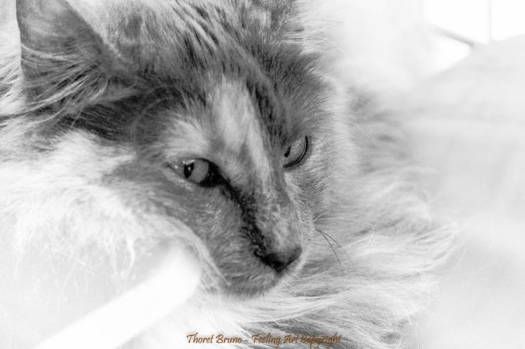 Cat & white by feeling-art.com