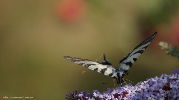 cropped-nectar-por-site.jpg