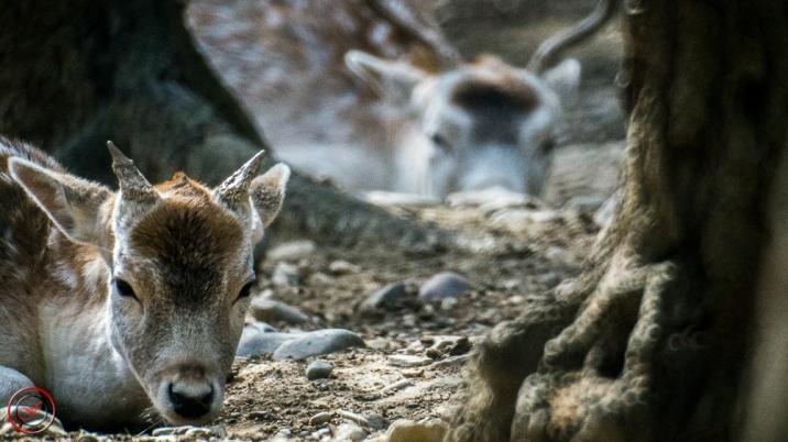 Bambi se repose feeling-art.com