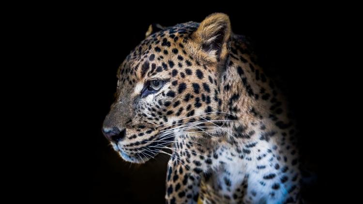Panther - feeling Art(C)