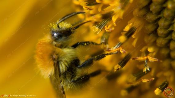 Pollen II by feeling-art.com