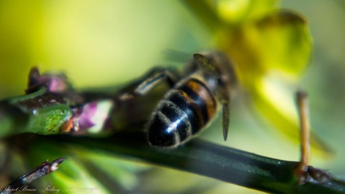 Une abeille en hivers