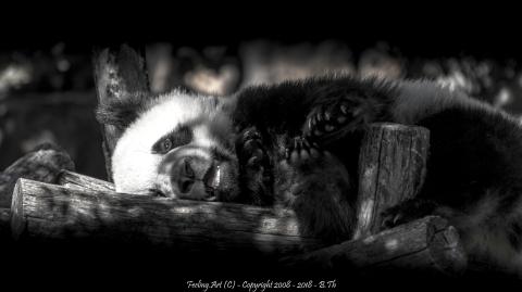 Jeune Panda.JPG